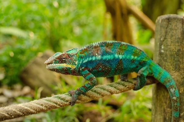 Chameleon_Anpassung_Photo-by-Sirma-Krusteva-on-Unsplash